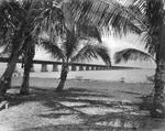 Concrete trestle bridge of Overseas Highway framed by palms in Pigeon Key