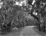 Dirt road in a wooded area near Tampa