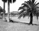 Couple sitting on a bench under a palm tree in front of Mirror Lake in St. Petersburg