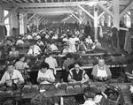 Cigar makers at work at Corral Wodiska y Ca., Incorporated