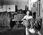 Man sorting tobacco at Swann Products, Incorporated