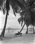 Man seated on palm-shaded bench at Southernmost Beach in Key West