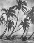 Photograph of a drawing of palm trees on a beach