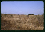 Bullfrog Creek grassland : Environmental Lands Acquisition and Protection Program Collection