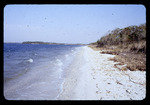 Beach on Hillsborough Bay : Environmental Lands Acquisition and Protection Program Collection