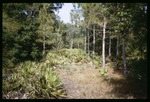 Clearing in former Optimist Club Youth Wilderness Camp : Environmental Lands Acquisition and Protection Program Collection
