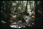 E.G. Simmons Park hiking trail : Environmental Lands Acquisition and Protection Program Collection