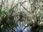 Cypress Creek : Environmental Lands Acquisition and Protection Program Collection