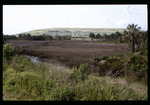 Csx Site Delaney Creek : Environmental Lands Acquisition and Protection Program Collection