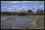 E.G. Simmons habitat enhancement : Environmental Lands Acquisition and Protection Program Collection