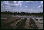 E.G. Simmons Park coastal habitat restoration : Environmental Lands Acquisition and Protection Program Collection