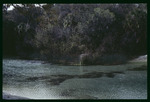 Alafia River at Lithia Springs Regional Park : Environmental Lands Acquisition and Protection Program Collection